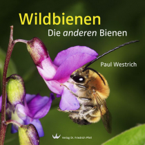 Faszination Wildbienen